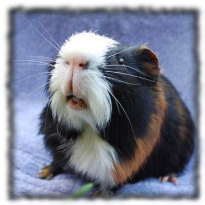 А у тебя есть аллергия на свиней?