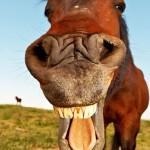 Пол коня за окном